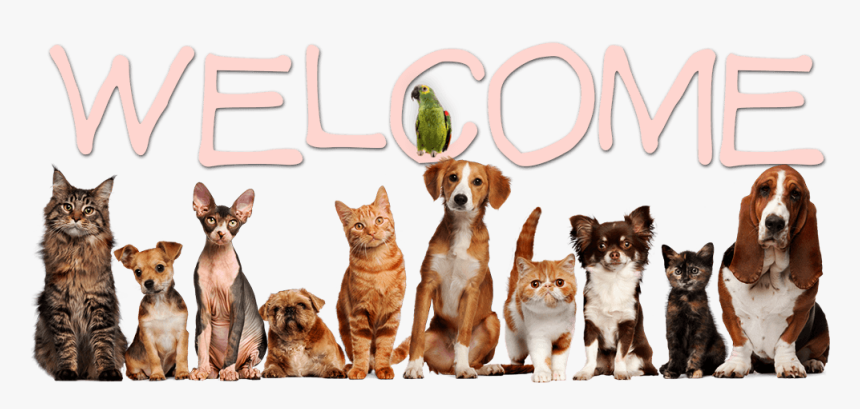 Welcome - Creative Pet Shop Logo, HD Png Download, Free Download