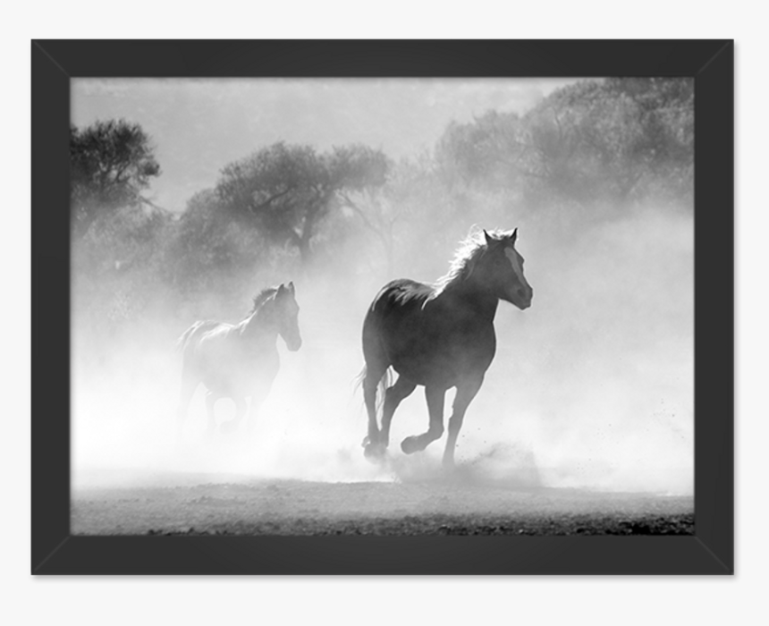 Horse Pics And Quotes About Freedom, HD Png Download, Free Download
