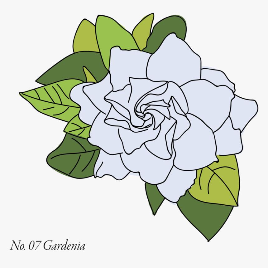 Gardenia-07 - Datura, HD Png Download, Free Download