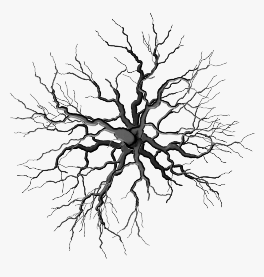 Collection Of Free Roots Drawing Dead Tree Download Tree Top Png Black Transparent Png Kindpng