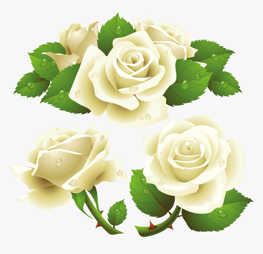 White Roses Png Images, Free Download Flower Pixtures - White Rose Vector Png, Transparent Png, Free Download