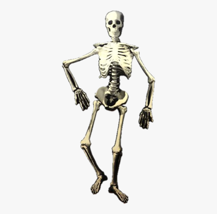 Skeleton, HD Png Download, Free Download
