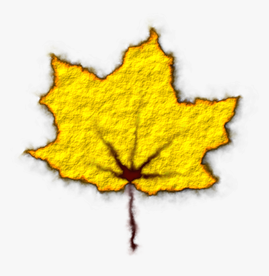 Leaves,colorful,still Vector Graphics,free Pictures, - Maple, HD Png Download, Free Download