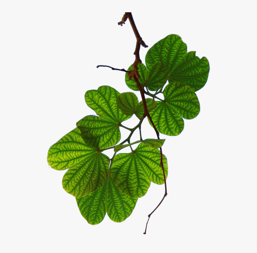 Leaves - Everything Has Been Figured Out Except, HD Png Download, Free Download