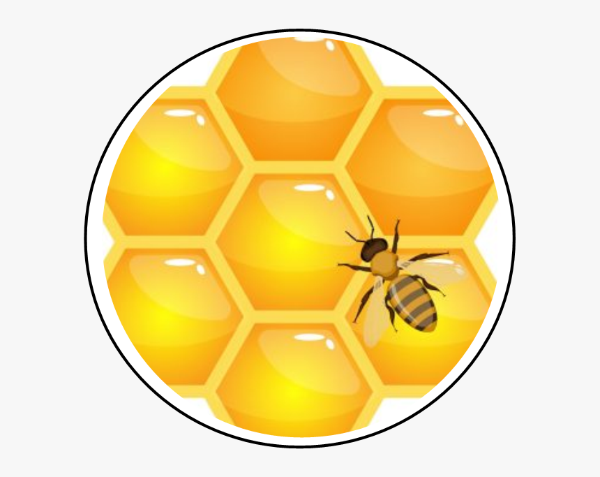 Honeycomb, HD Png Download, Free Download