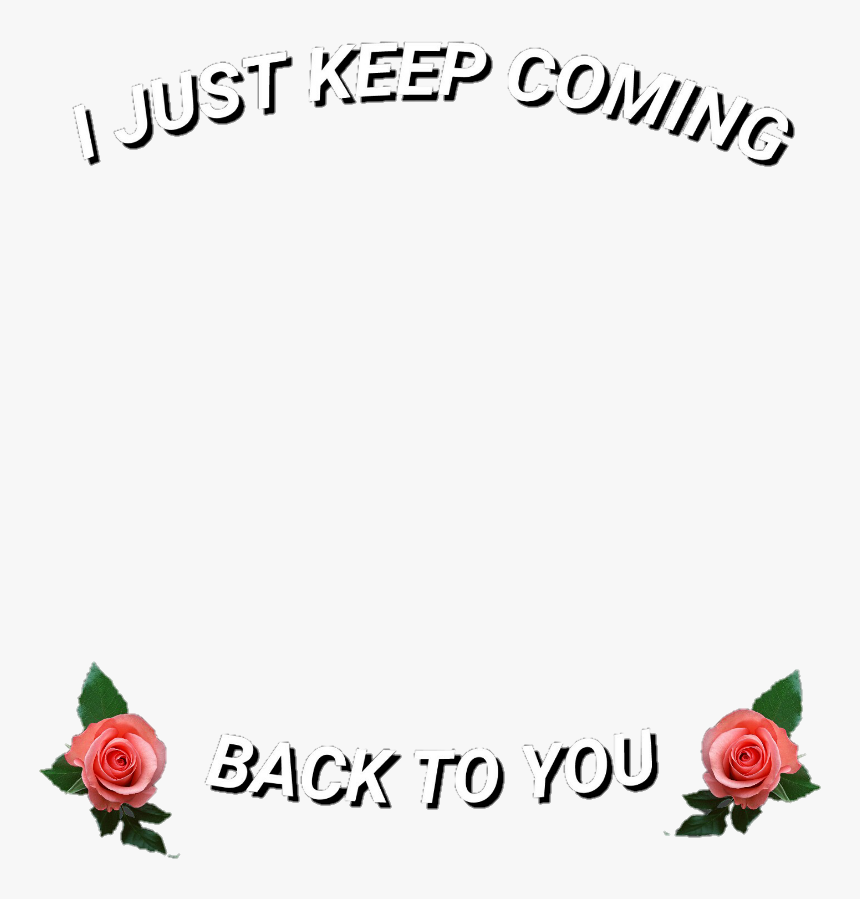 Png, Roses, And Back To You Image - Garden Roses, Transparent Png, Free Download