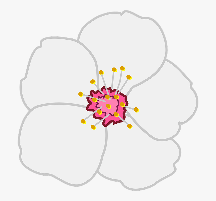 Vector Flowers Icons Png Almond Blossoms Clipart - Cherry Flower, Transparent Png, Free Download