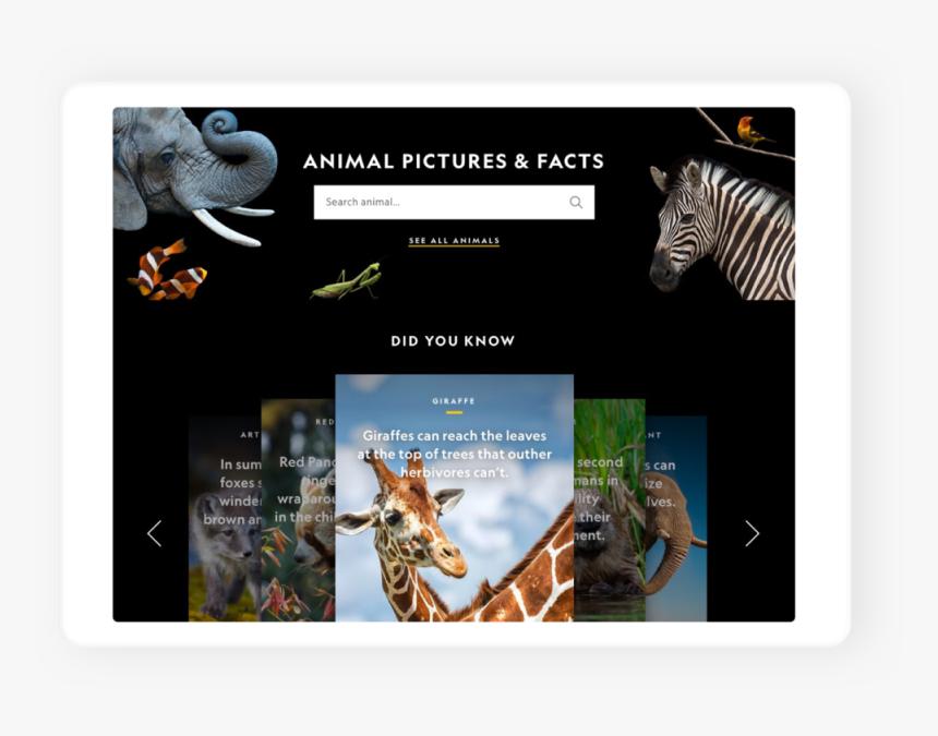 04-animals1 - Zebra, HD Png Download, Free Download