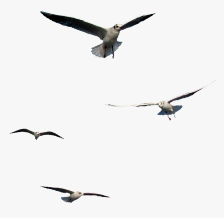 #birds #flying #seagulls - Flying Bird Png Gif, Transparent Png, Free Download