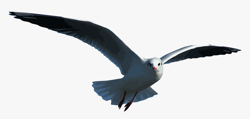 Petrel Outlander Seagull - Seagull Vector Flying Gif, HD Png Download, Free Download