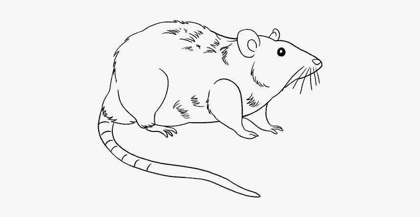 How To Draw Rat - Drawing Photos Download Rat, HD Png Download, Free Download