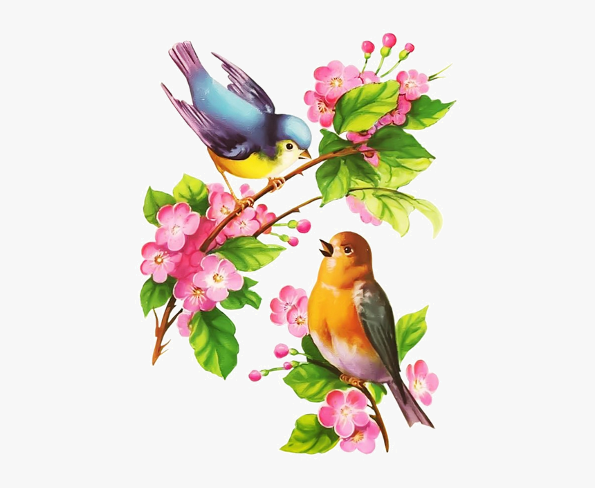 Beautiful Birds In Spring Hd Png Download Kindpng