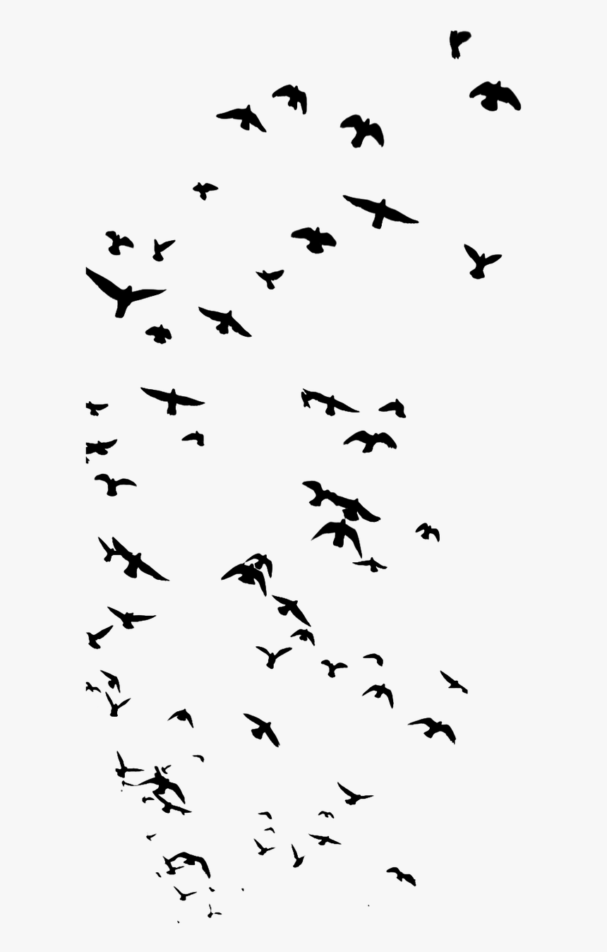 Birds Animal Nature Free Photo - Bird Silhouette Flock, HD Png Download, Free Download