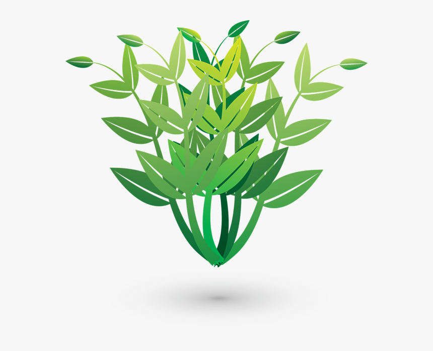 Plants, HD Png Download, Free Download