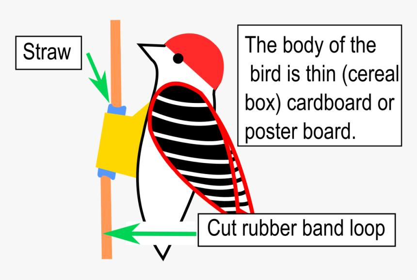 Woodpecker Gravitational Energy Experiment, HD Png Download, Free Download