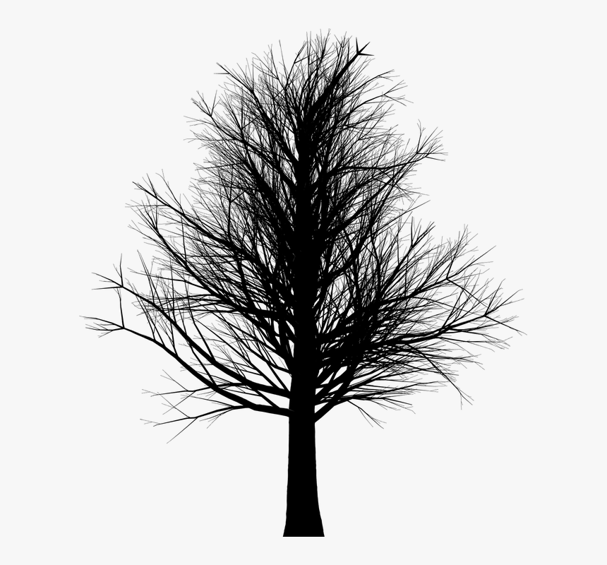 Arbol Sin Hojas Silueta Png, Transparent Png, Free Download