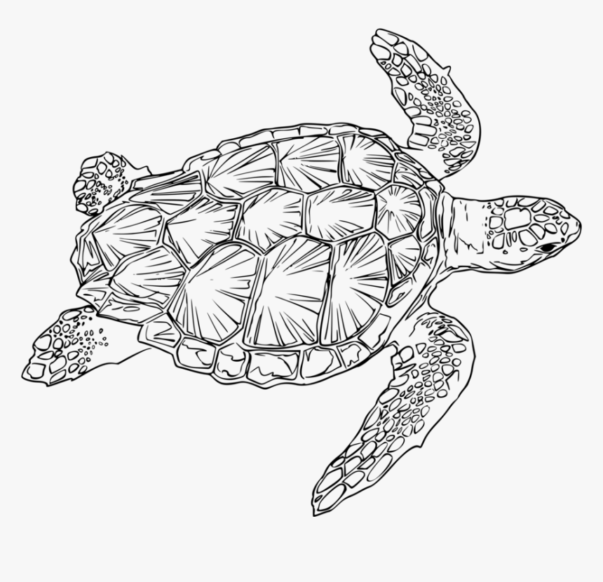 Turtle,line Art,reptile - Sea Turtle Line Drawing, HD Png Download, Free Download