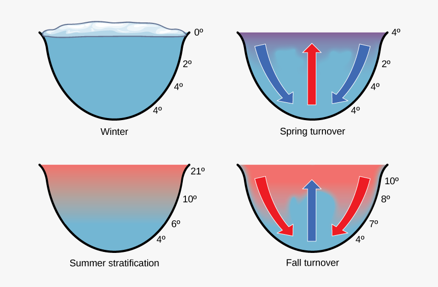 The Illustration Shows A Cross-section Of A Lake In - Lake Temperature, HD Png Download, Free Download