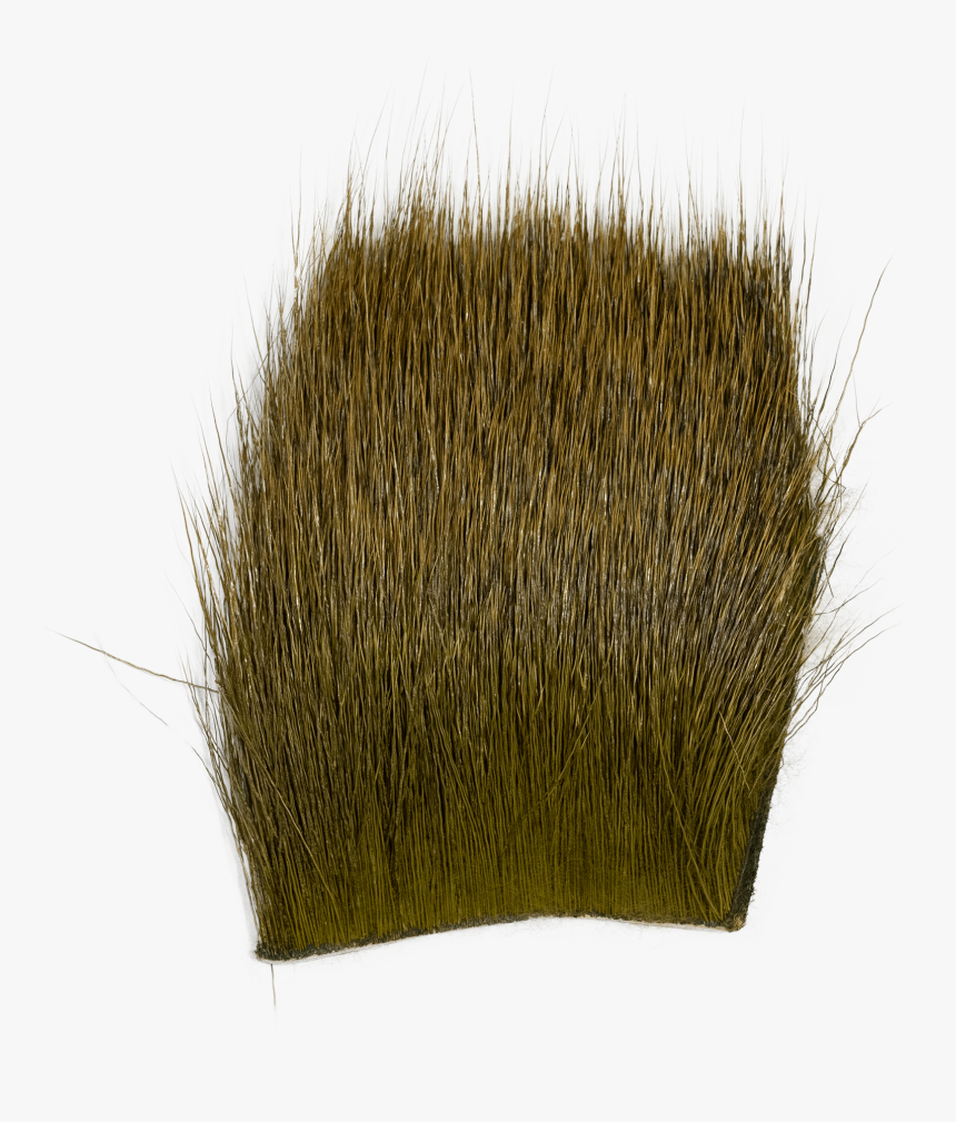 Grass, HD Png Download, Free Download