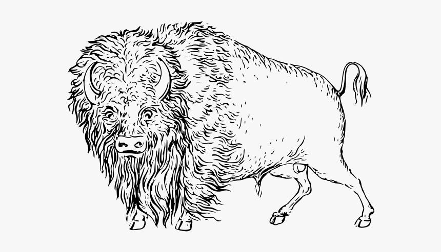 Buffalo - Clip Art, HD Png Download, Free Download
