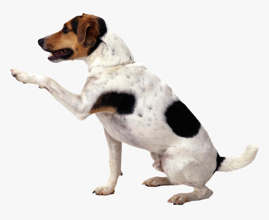 Dog Png - Dog Png Hd, Transparent Png, Free Download