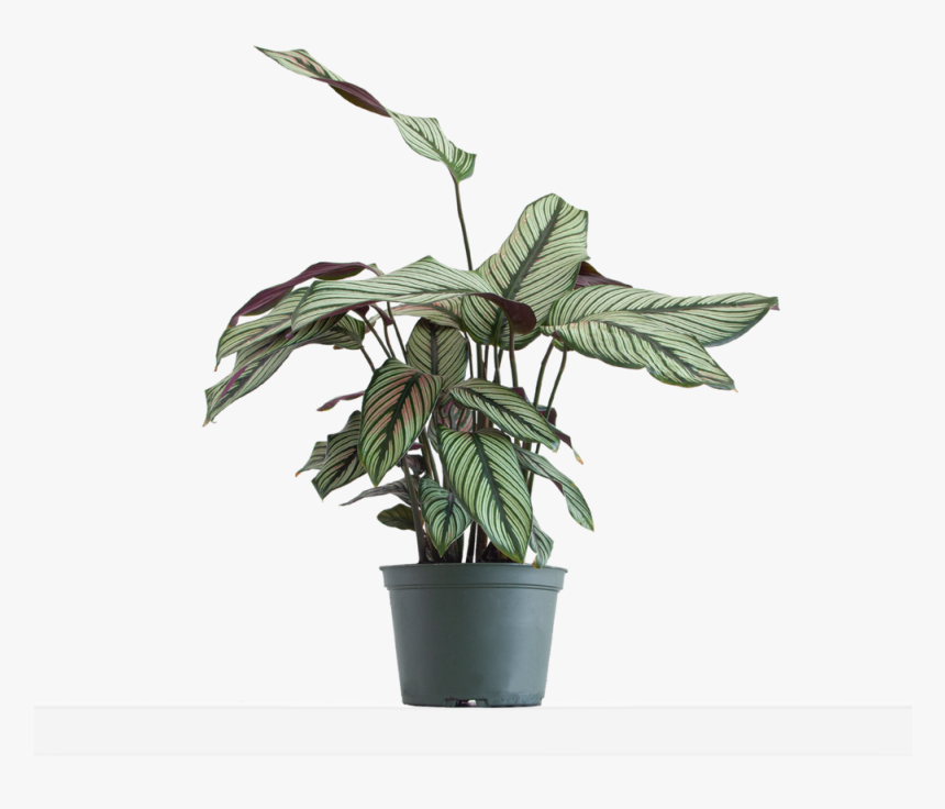 Large / Grow - Flowerpot, HD Png Download, Free Download