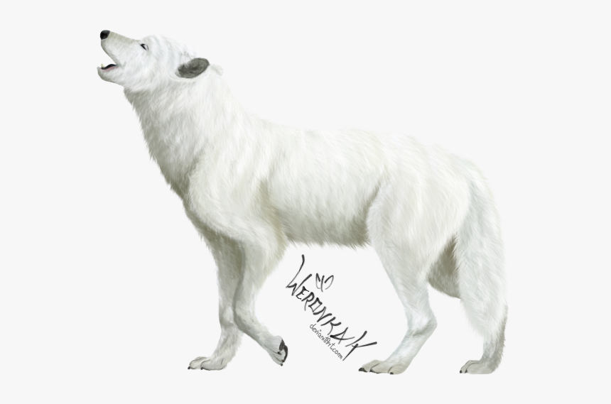 3185711917, White Wolf - Transparent White Wolf Png, Png Download, Free Download