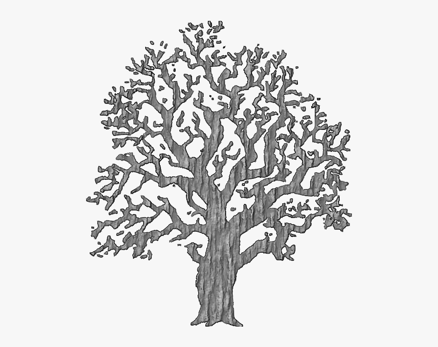 Tree With Bark - Tree Ring And Precipitation Data, HD Png Download, Free Download