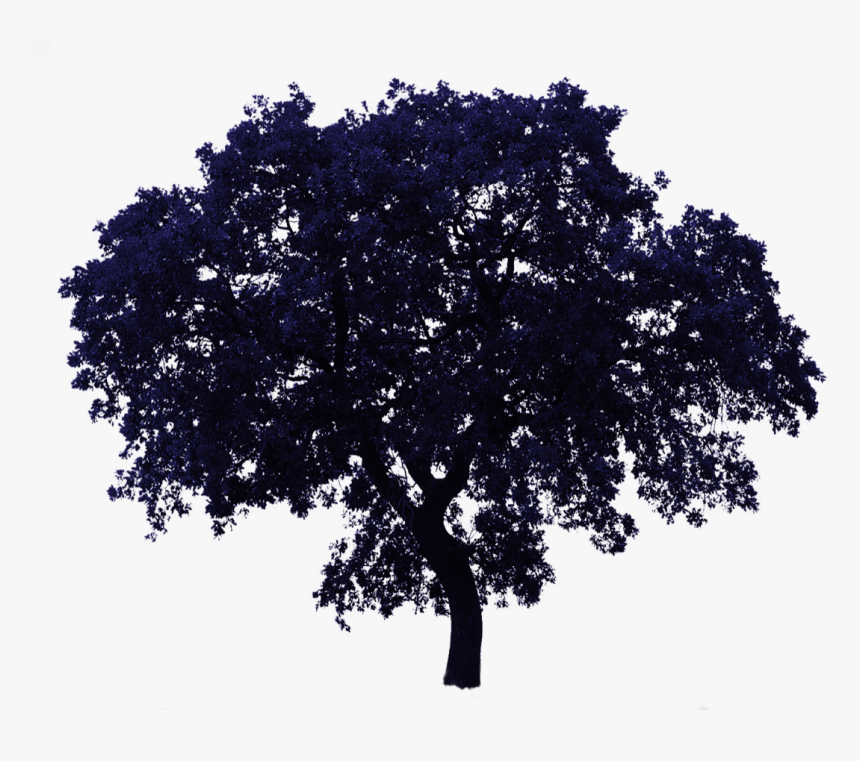 Realistic Tree Transparent Background, HD Png Download, Free Download