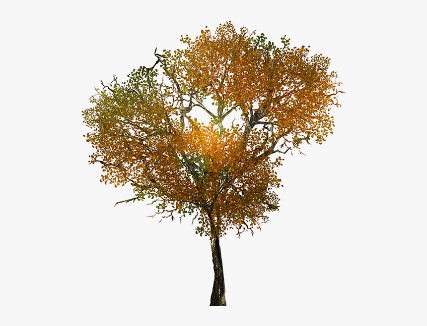 Texture For Large Leafy Branches For Tree Models - Transparent Background Autumn Tree Png, Png Download, Free Download