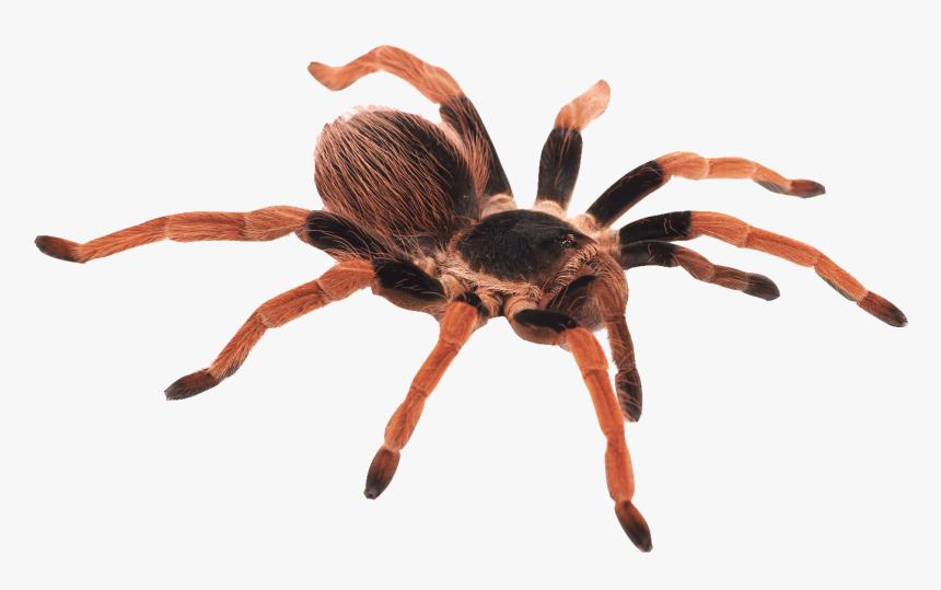 Barack Obama Trapdoor Spider, HD Png Download, Free Download