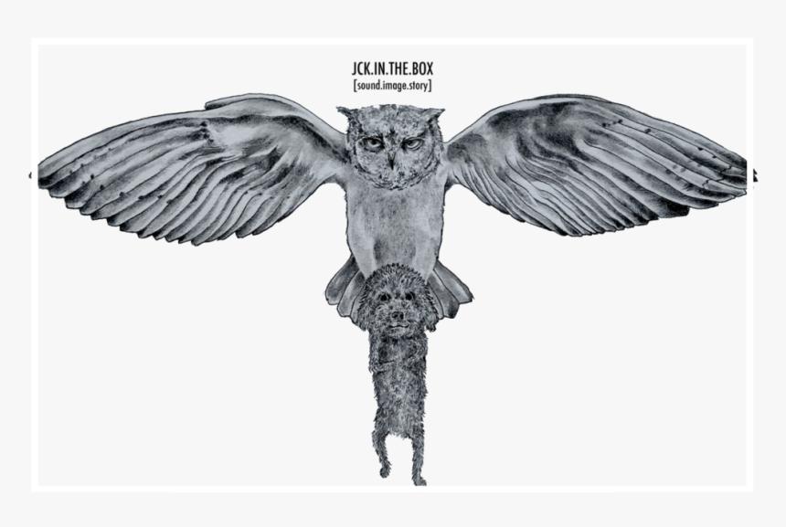 Transparent Owl, HD Png Download, Free Download