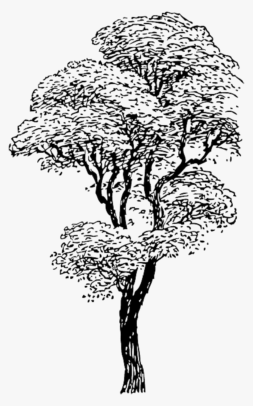 Outline Drawing Sketch Tree Cartoon Winter Trees Drawings Of Tall Trees Hd Png Download Kindpng Find & download free graphic resources for trees cartoon. outline drawing sketch tree cartoon