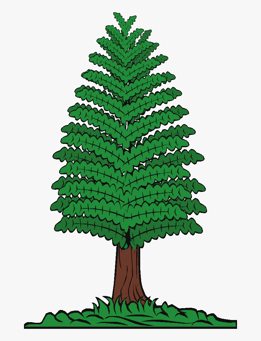 Pine Trees Of Angus On - Trees Timber Cartoon, HD Png Download, Free Download