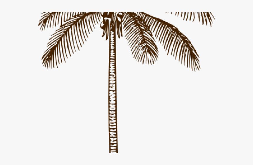 Outline Of Coconut Tree Leaf, HD Png Download, Free Download