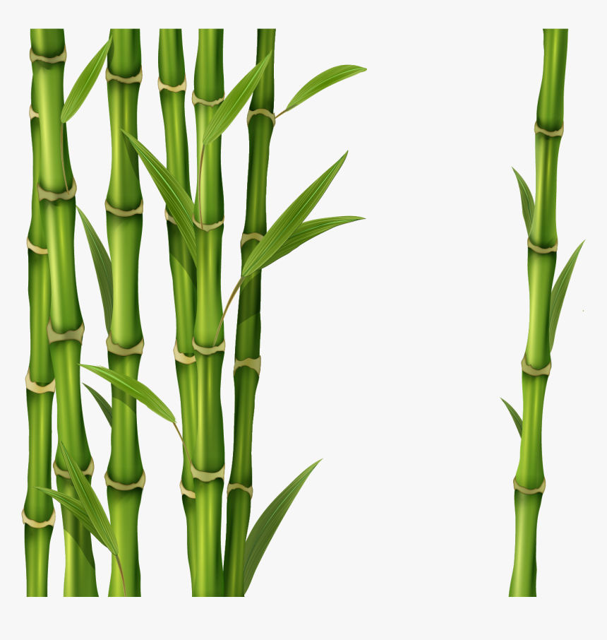 Png Free Images Only - Green Bamboo Stick Png, Transparent Png, Free Download