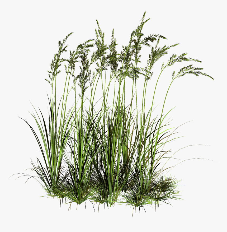 Transparent Grass Png Water Plants Cut Out Png Download Kindpng