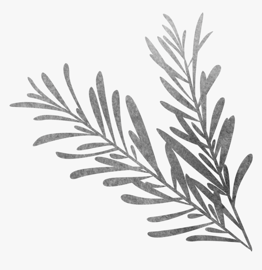Vector Library Black And White Sketch Biological Grass - Rosemary Black And White Png, Transparent Png, Free Download