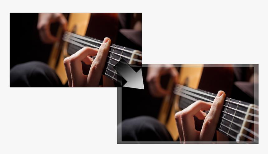 Professional Guitarist, HD Png Download, Free Download