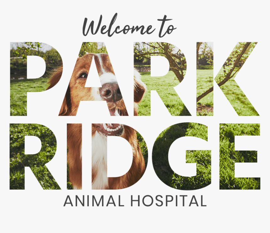 Park Ridge Video Overlay - Grass, HD Png Download, Free Download