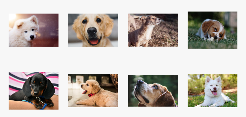 / Images/examples Getting Started 19 0 - Labrador Retriever, HD Png Download, Free Download