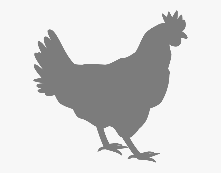 Grey Chicken Svg Clip Arts Vector Chicken Silhouette Png Transparent Png Kindpng