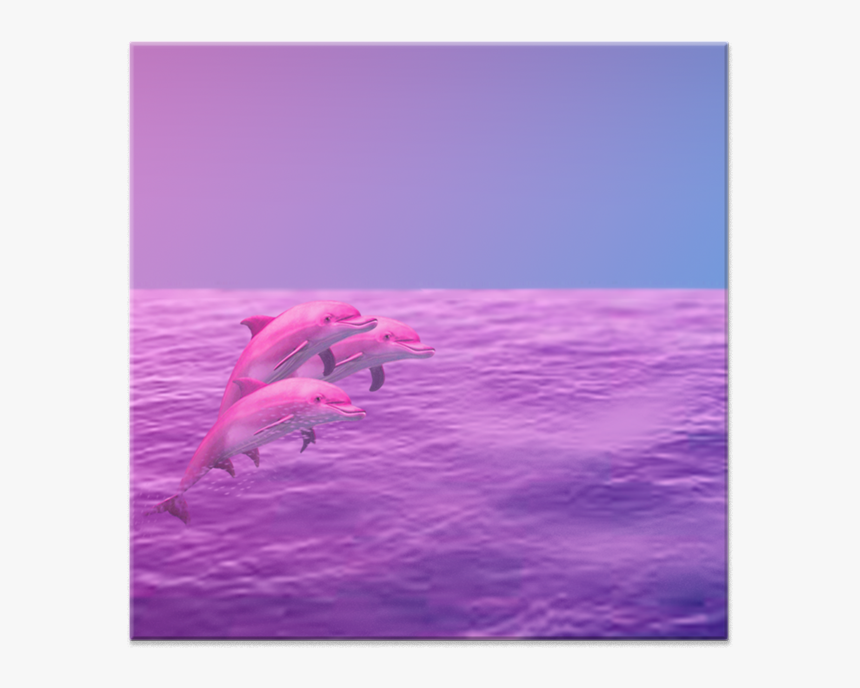 Azulejo Dolphin De Renan Oliveirana - Bottlenose Dolphin, HD Png Download, Free Download
