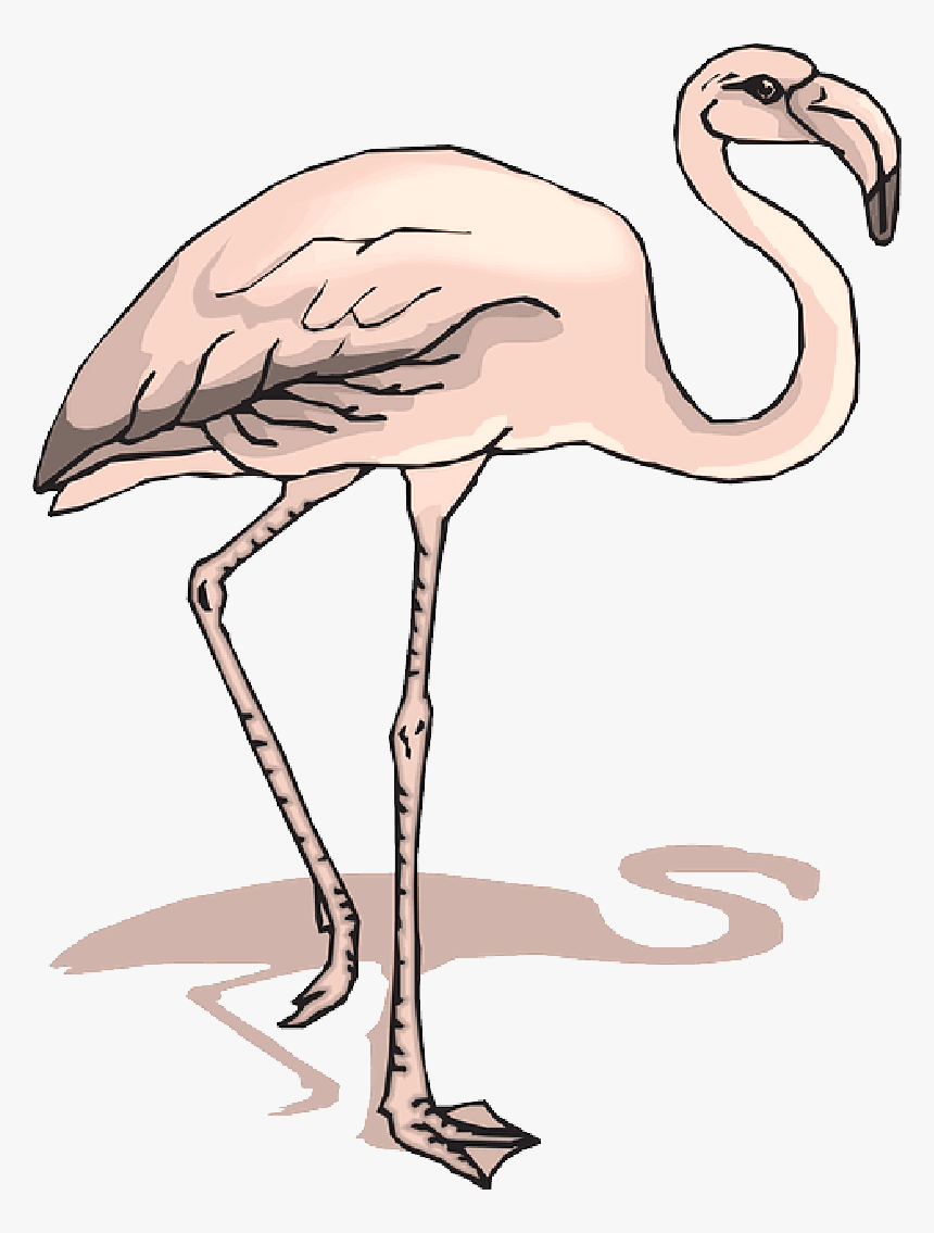 Shadow, Bird, Wings, Flamingo, Long, Neck, Animal, - 2 Legged Zoo Animals Clipart, HD Png Download, Free Download