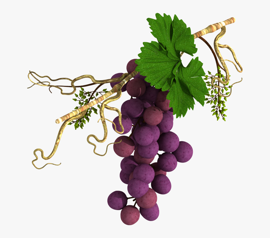Grape Vine In Horizontal Alignment - Religious Grape Vines, HD Png Download, Free Download