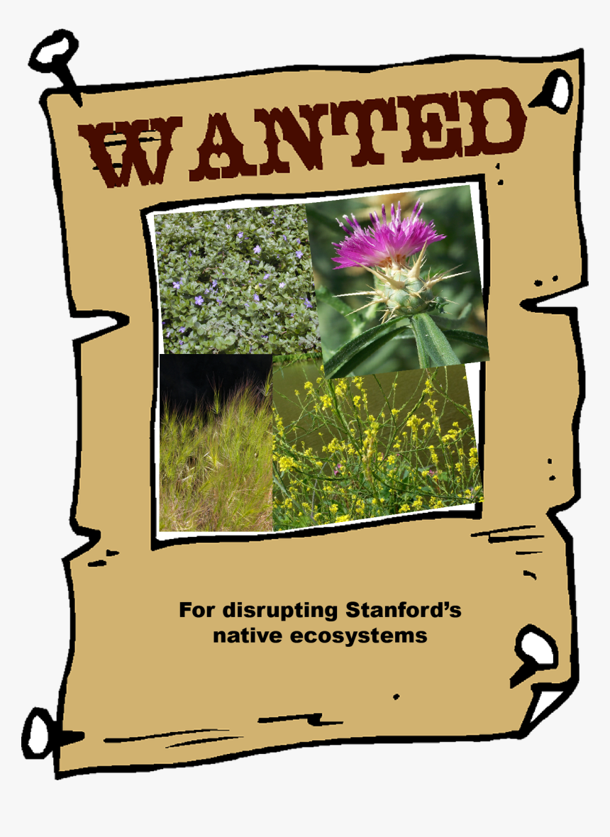 Wanted Photo Frame Hd, HD Png Download, Free Download