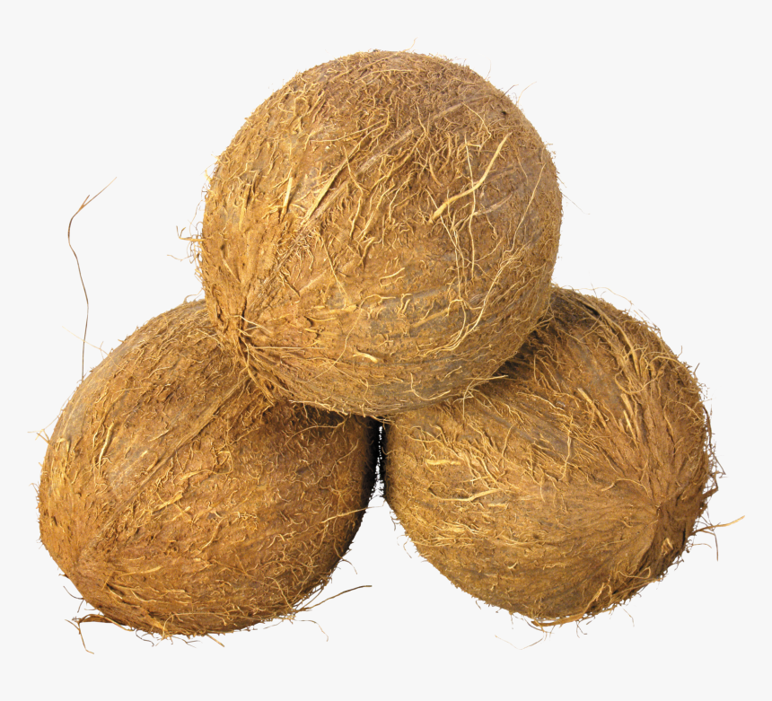 Coconuts Png, Transparent Png, Free Download
