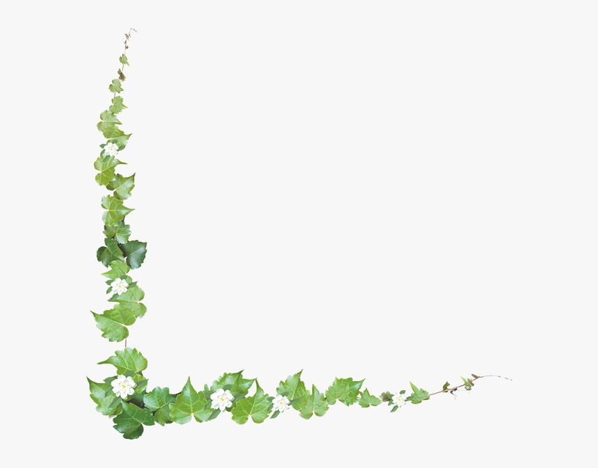 Clip Art Common Grape Vine Portable Network Graphics - Grape Vine Borders, HD Png Download, Free Download
