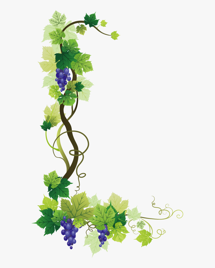 Common Grape Vine Wine Grape Leaves - Grape Vine Border Png, Transparent Png, Free Download