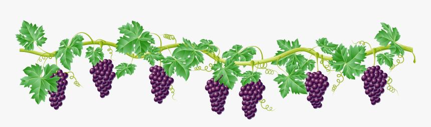 Clip Art Kyoho Clip Art Transprent - Grape Vines Clipart Png, Transparent Png, Free Download